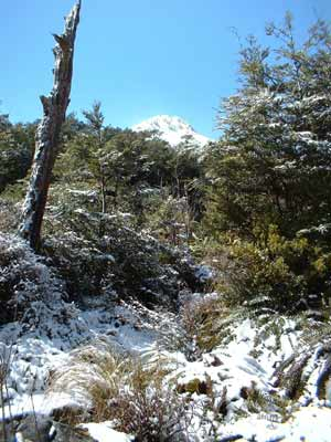 1000 acre plateau - Kahurangi National Park